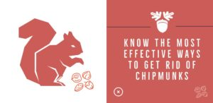 How to Get Rid of Chipmunks (3)