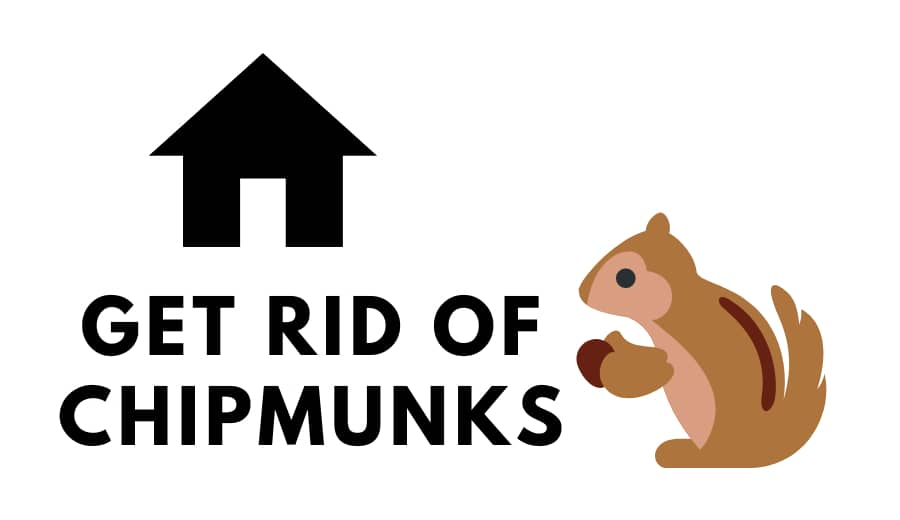 How to Get Rid of Chipmunks | Chipmunks Trap | Chipmunk Repellent